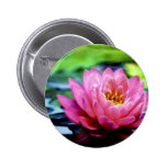 water-lily-jim-darnall.jpg pinback button