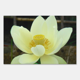 water lily lawn signs