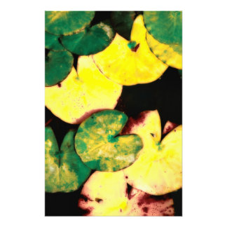 Water lily leaves photo print