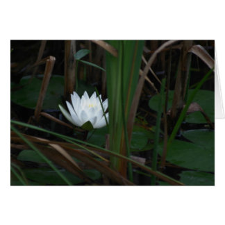 Water Lily Lotus Aglow Flower Photography Card