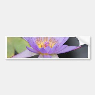 Water Lily Lotus Car Bumper Sticker