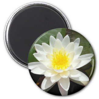 Water Lily 2 Inch Round Magnet