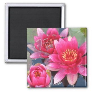 Water Lily Magnet