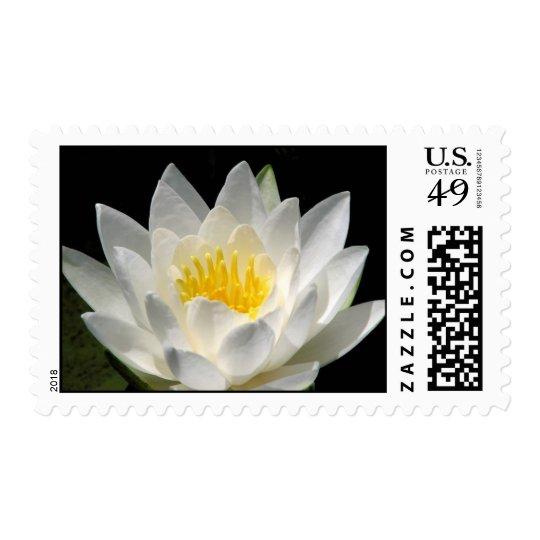 Water Lily medium stamp