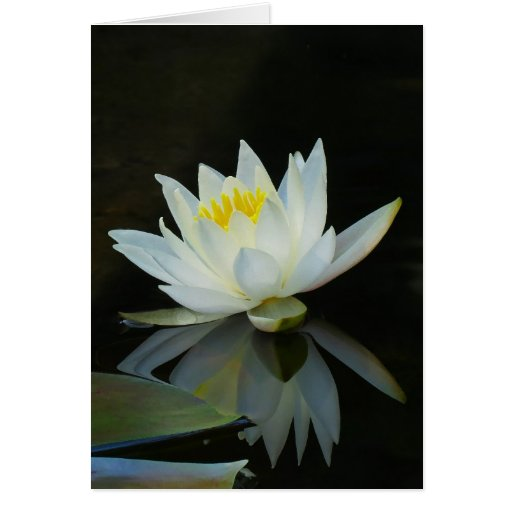 Water Lily Note Card