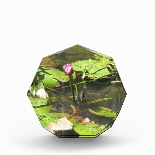 Water LIly Pad Pond Awards