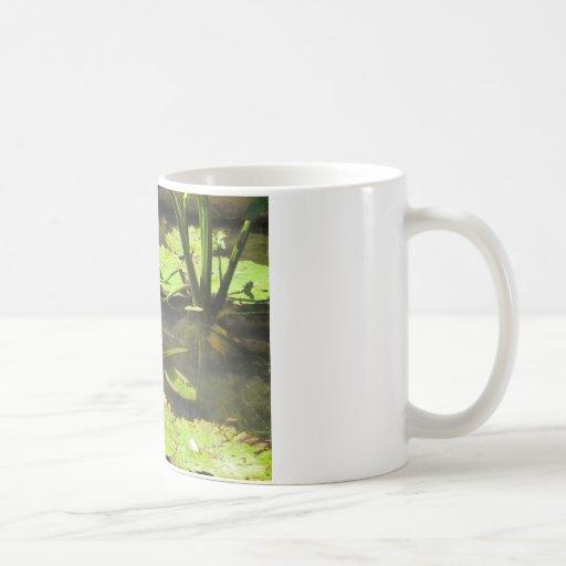 Water LIly Pad Pond Classic White Coffee Mug