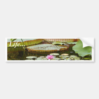 Water Lily Pads Ponds Car Bumper Sticker