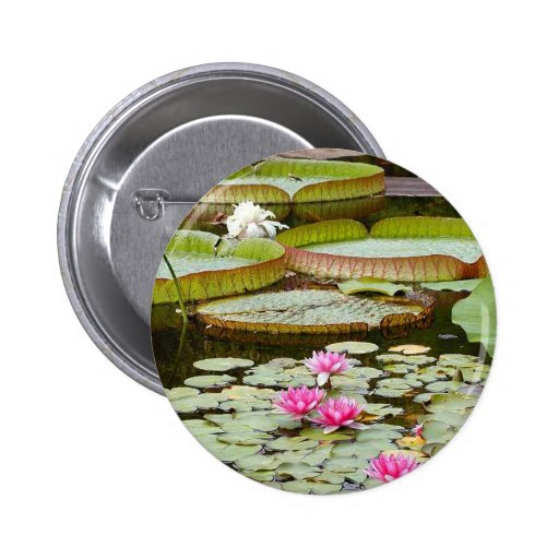 Water Lily Pads Ponds Pins
