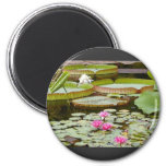 Water Lily Pads Ponds Refrigerator Magnets