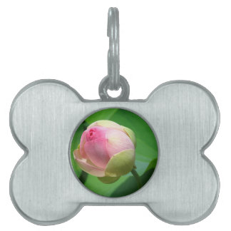 water-lily pet ID tag