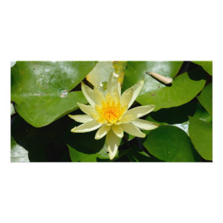 water lily Photo Card