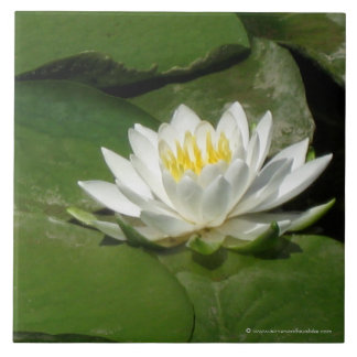 Water Lily Photograph Large Square Tile