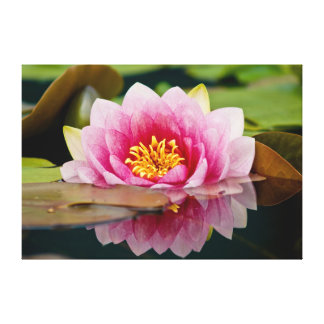 Water lily photography stretched canvas