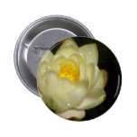 Water Lily Pinback Buttons