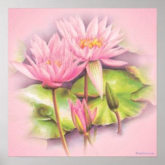 Water lily pink fine art botanical poster print