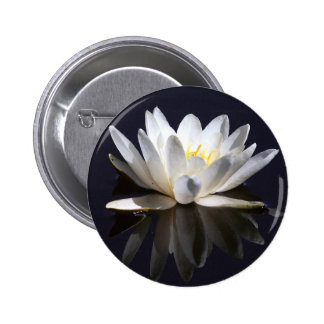 Water-Lily Pins