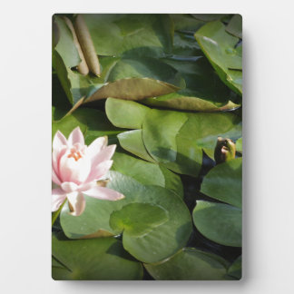 Water Lily Plaque