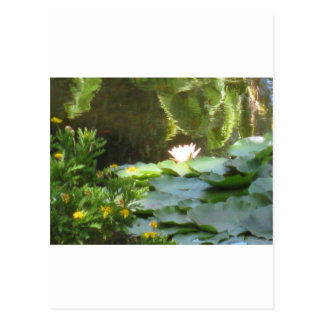 Water Lily Pond Postcard