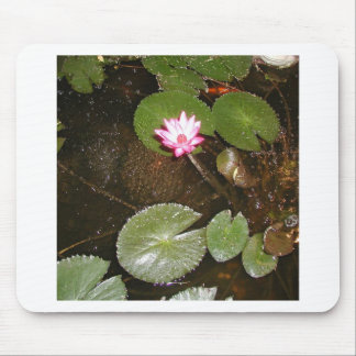 WATER LILY PONDS MOUSE PAD