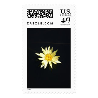 Water Lily Postage Stamp