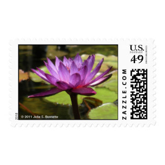 Water Lily Postage