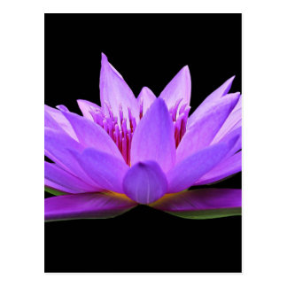 water-lily postcard