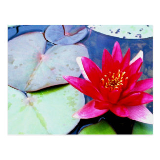 Water Lily Postcard 2