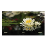 Water Lily Profile Card Business Cards