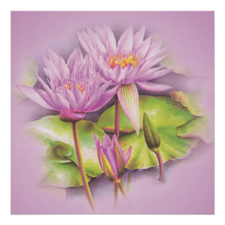 Water lily purple flowers poster