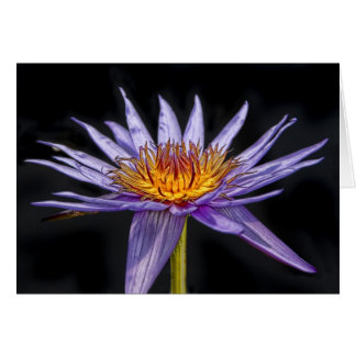 Water Lily Purple Tropical Greeting Card
