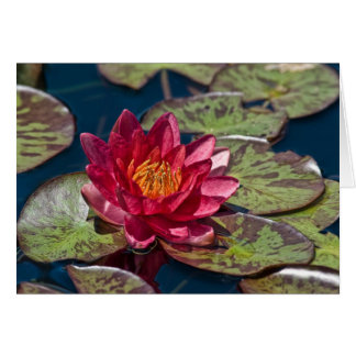Water Lily Red Card