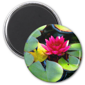 Water Lily Refrigerator Magnet