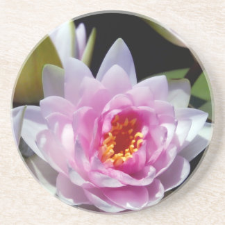 Water Lily Sandstone Coaster