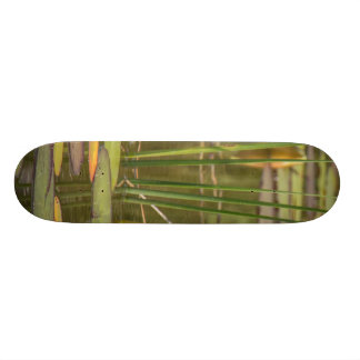 water lily skateboard