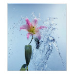 Water Lily Splash Poster