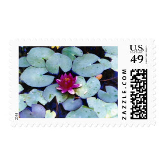 Water Lily Stamp