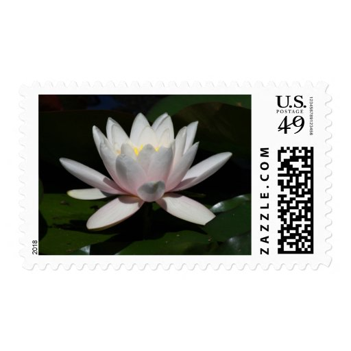 Water lily stamps