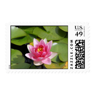 Water lily summer time bloom postage