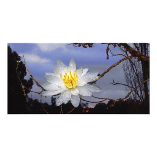 Water Lily Sunrise Card Photo Card