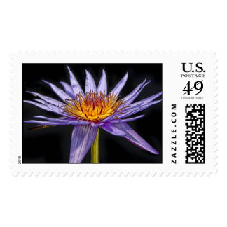 Water Lily Tropical Purple & Gold Postage