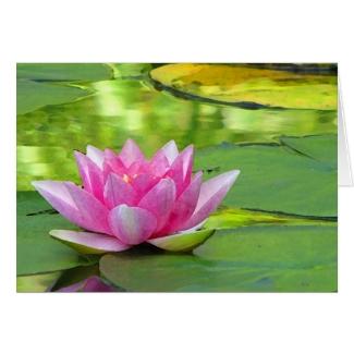 Water Lily Valentine