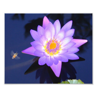 """Water Lily with Bee 10"""" x 8"""" Photo Print"""