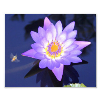 """Water Lily with Bee 8"""" x 10"""" Photograph"""
