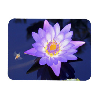 Water Lily with Bee Premium Magnet