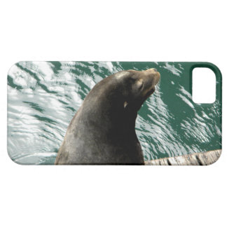 Water Lion iPhone SE/5/5s Case
