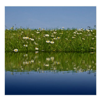 Water Meadow Posters