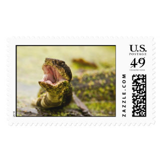 Water Moccasin Display Postage Stamp