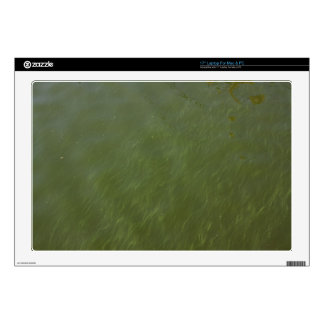 """Water, near shore. decal for 17"""" laptop"""