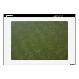 "Water, near shore. skin for 15"" laptop"